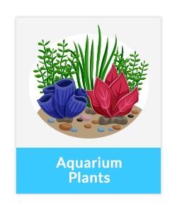 Indian aquarium plants